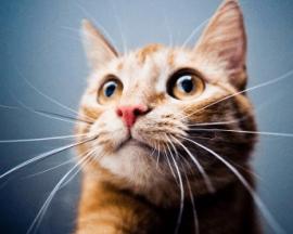 独一无二的猫咪名字