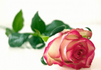 浪漫的花店名字大全