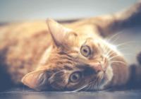 适合猫的沙雕名字