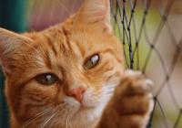 女猫咪名字大全可爱