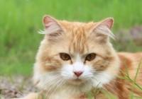 给主人带来好运的猫名字