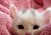 给小奶猫起好听萌名字