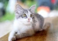 寓意好运的猫咪名字 吉祥又旺财